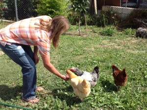 Feeding the chickens while taking a break in a writing session with my buddy, Dave Yaden, at his hom in Los Angeles.